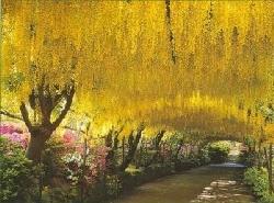 Bodnant Garden Picture